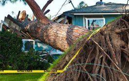 Veszélyes fák vannak kertjében? Itt a segítség!