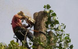 Mikor lehet szükség a fák kivágására?