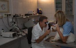 Gond van kutyája vagy macskája látásával?