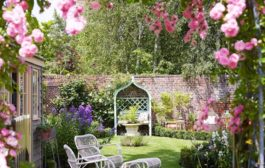 Különleges növények az Ön kertjébe!