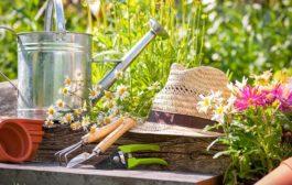 Legyen az Ön kertje is zöld és egészséges!