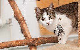 Barátságos, gondoskodó macska panzió