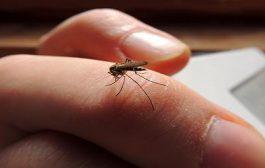 Profi megoldás rovarok és rágcsálók ellen