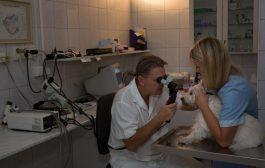 Láthatóan szembetegségben szenved kutyája?