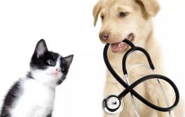 A megbízható állatorvos