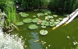 A kerti tó egészsége